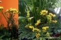 Sóvirág a kertben