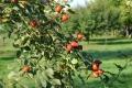 Az ősz kincsei